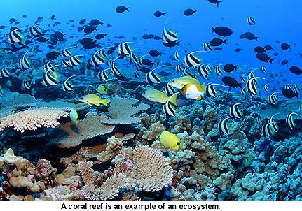 mammalikerfisk.jpg